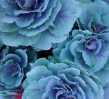 Garden Kale by Laurie Perry