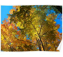 Canopy of Color Poster