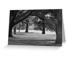 Afternoon Sun in Black and White Greeting Card
