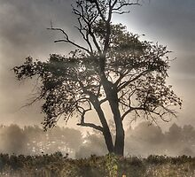 Morning Mist and Elder Tree  by Edith Reynolds