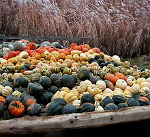 ╭∩╮( º.º )╭∩╮ Gourds Fall Harvest ~ A Sure Sign Of Fall ╭∩╮( º.º )╭∩╮ by ╰⊰✿ℒᵒᶹᵉ Bonita✿⊱╮ Lalonde✿⊱╮