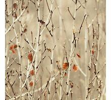 coppice Photographic Print