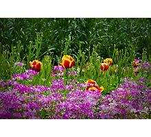 Flowers_6 Photographic Print