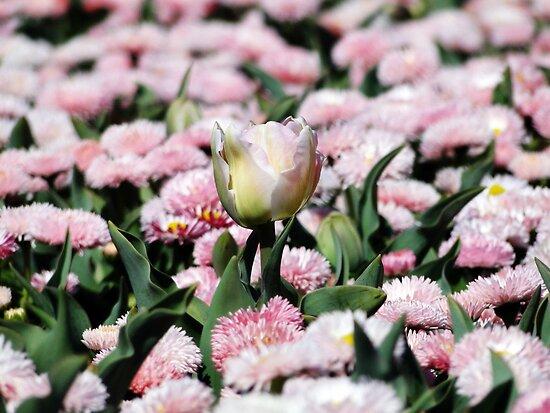 Floriade 2011 - October by Sharon Robertson