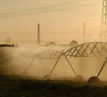 Sprinklers spraying water in field by Sami Sarkis