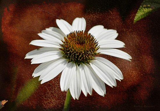 Single Cone Flower - Textures by Kathy Baccari