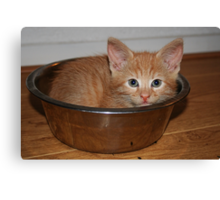 Kitten in a Bowl Canvas Print