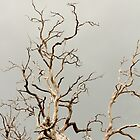 Dead Tree 1 by TeAnne