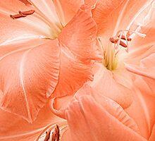 Peach Gladioli Swirl by Ann Garrett