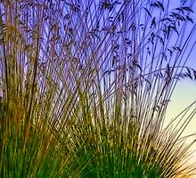 Tall Grass by SSDema