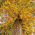 Autumn Tree by SSDema