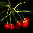 Red Cherries by SSDema