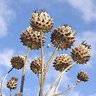 Seedheads by sbarnesphotos