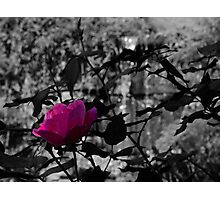 Selective Colored Rose Photographic Print