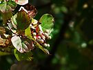 Autumn White Berries by Marcia Rubin