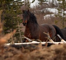 Rushing Stallion by JamesA1
