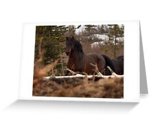 Rushing Stallion Greeting Card