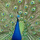 Animal Wonder by Leanne Allen