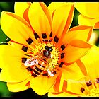 Bee on .... by tmfijala