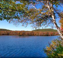 Autumn Daydream by Monica M. Scanlan