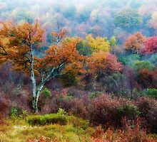 October Fog by Jane Best