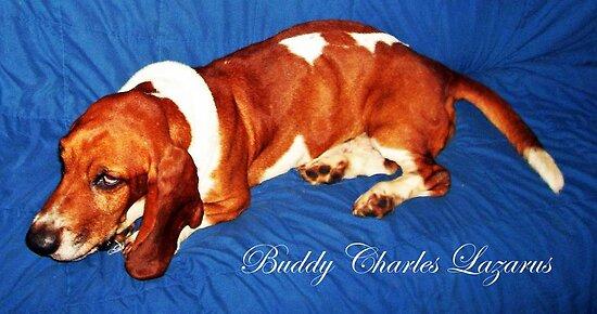 """Meet """"Buddy"""" by Deborah Lazarus"""