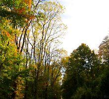 Forest in Time by Scott Ferguson
