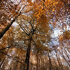 Autumn leaves by Mark Smart