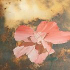 Pink Flower by mnathanielc