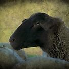 """Here's Lookin' At Ewe Kid "" by Renee Blake"