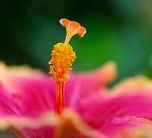 Hawai by Aase