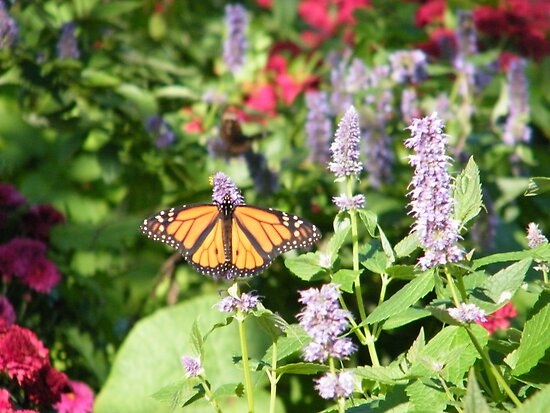 Butterflies, Liberty State Park, New Jersey by lenspiro