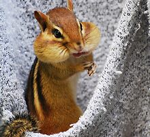 Cheeky Chippie by Laurie Minor