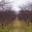 Old Mission Orchard by Michael L. Colwell