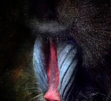 I'm thinking, don't disturb! (Baboon) by vigor