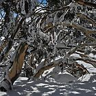 Snowy tree tunnel by Colin12