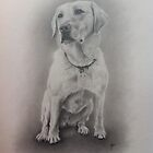 Golden Labrador by Peter Lawton