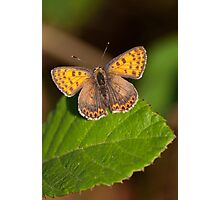 Orange Butterfly Photographic Print