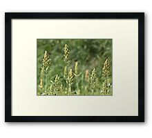 Greenery on my way to Goa Framed Print