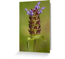 Prunella vulgaris Greeting Card