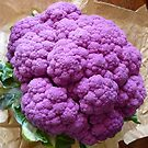 Cauliflower var. Sicilia violetto by bubblehex08
