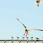 Liberty Island Scavengers by Jacki Campany