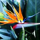 Bird of Paradise by shaina