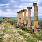 Volubilis by Ian Fegent