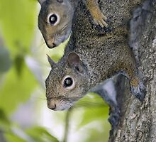 Sibling squirrels by Mundy Hackett