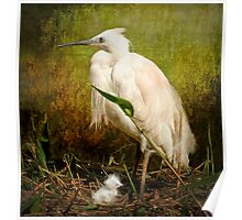 Little Egret and Chick Poster