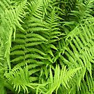 Vibrant green fern for iPhone by Philip Mitchell