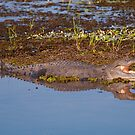 Crocodile on the South Alligator River, Kakadu National Park, Australia by Erik Schlogl