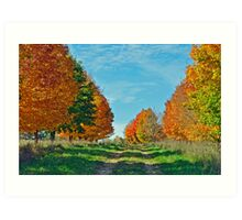 Maple Tree Lane Art Print