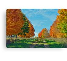 Maple Tree Lane Canvas Print